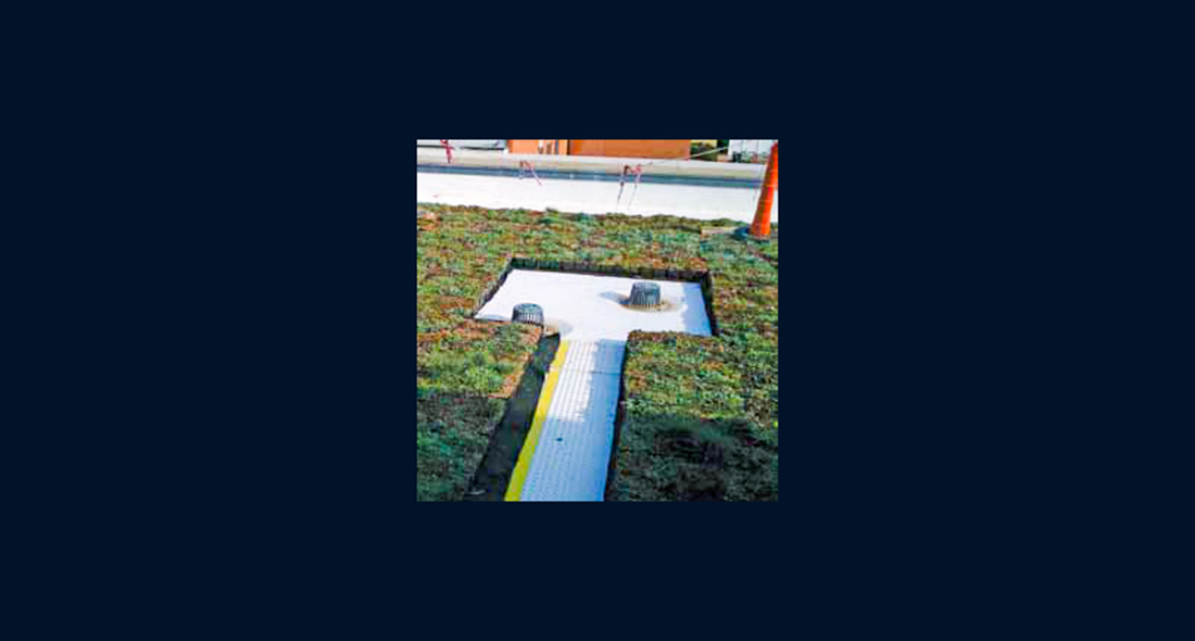 Webster University Quot Green Roof Quot Western Specialty