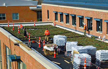 Webster University - Green Roof